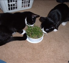 Cat Grass Fun 3