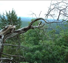 Mountain Gnarled 1