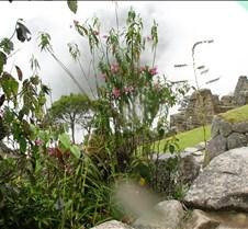 Peru 305