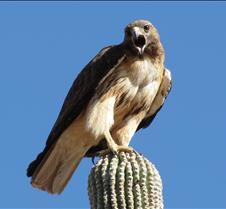 Hawks ans Eagles