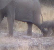 Ivory Lodge & Safari Pictures0107