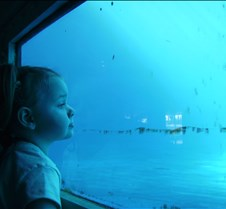 Miami Seaquarium 039