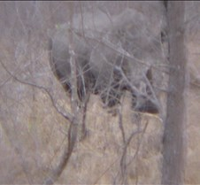 Ivory Lodge & Safari Pictures0110