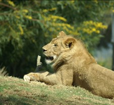 Wild Animal Park 03-09 197