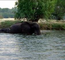 Sunset River Cruise Zambezi River0013