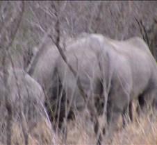 Ivory Lodge Safari Mupulanga0018