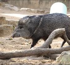 J Zoo 0611_100