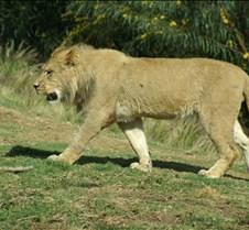 Wild Animal Park 03-09 191