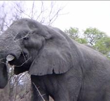 Ivory Lodge & Safari Pictures0050