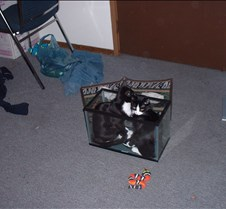 kitty picts dec 03 005