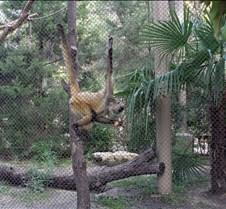 J Zoo 0611_054