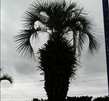 FloridaOrlandoTrip2010_013