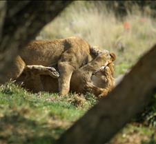 Wild Animal Park 03-09 159