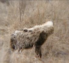 Ivory Lodge & Safari Pictures0071