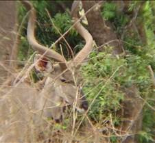 Ivory Lodge & Safari Pictures0148