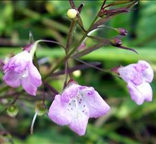 tinypinkflower2