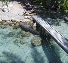 Miami Seaquarium 118