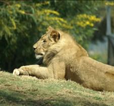 Wild Animal Park 03-09 194