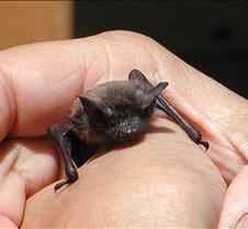 072402 Bat 09