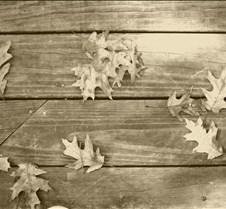 leavesonwoodsienna