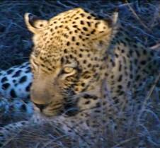 Ivory Lodge Safari Mupulanga0036