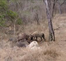 Ivory Lodge & Safari Pictures0016