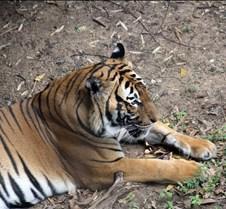 J Zoo 0611_062