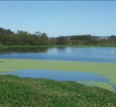 Marsh 002