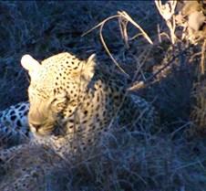 Ivory Lodge Safari Mupulanga0034
