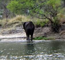 Sunset River Cruise Zambezi River0015