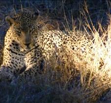 Ivory Lodge Safari Mupulanga0039