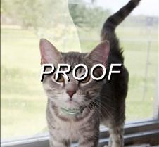 043013-POW-cat