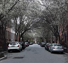 treestreet