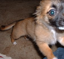 puppy picts 9-21-03 001