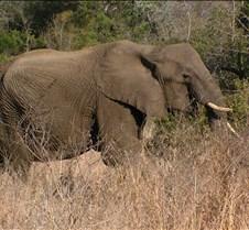 Ivory Lodge Safari Mupulanga0051