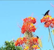 Tucson butterfly lazy K 5