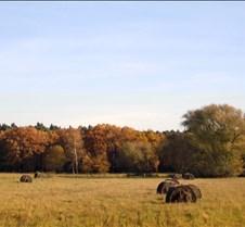 Hay Field, Brandenburg