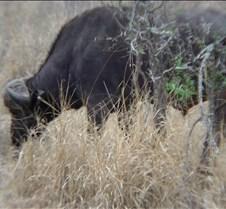 Ivory Lodge & Safari Pictures0091