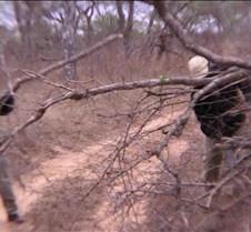 Ivory Lodge & Safari Pictures0038