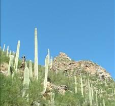 Tucson Sabino Canyon 17