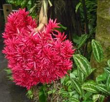 Hawaii 2010 281