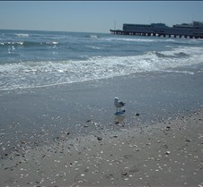 Beach Atlantic City8