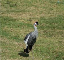 Wild Animal Park 03-09 130