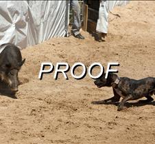 042213_hog-dog-02
