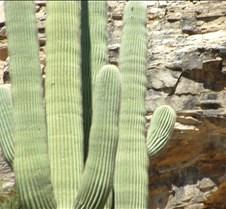 Tucson Sabino Canyon 2
