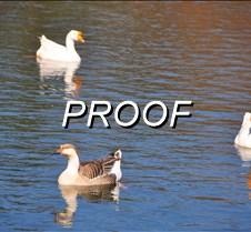 03-05-13_Ducks03