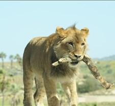 Wild Animal Park 03-09 209