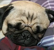 murphy snoooozing