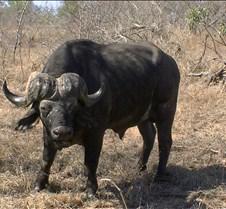 Ivory Lodge Safari Mupulanga0056