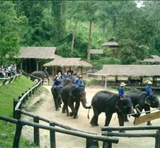 171 elephant show